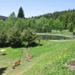 Alloggio - Selva Boema